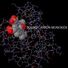 carbon monoxide bound to heme