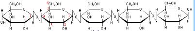 celluloe 1,4 linkage