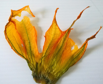 dehydrated zucchini blossoms