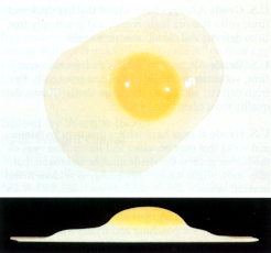 Picture of Grade AA egg