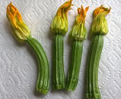 female zucchini flower